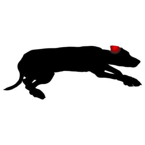 Artrose hond - Dierenarts Boschhoven