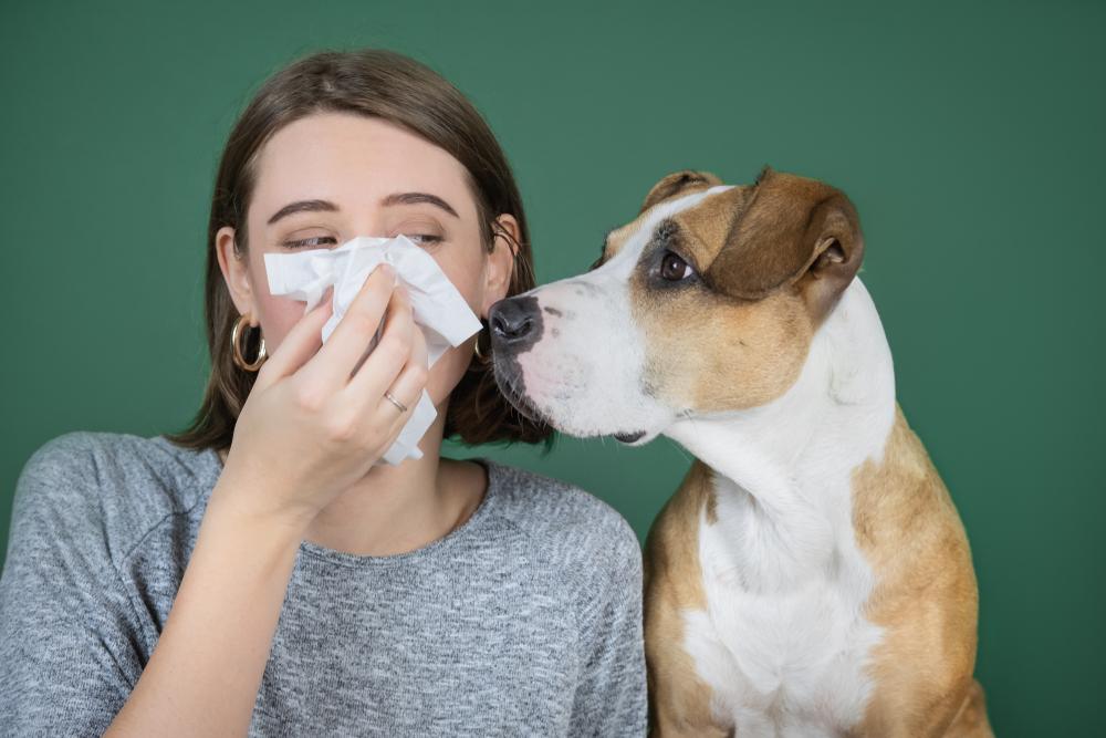 Coronavirus bij huisdieren - Dierenkliniek Coppelmans