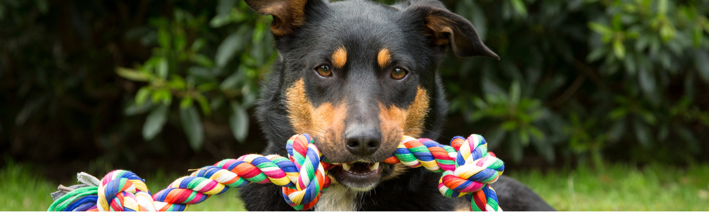 Hond Dierendag 2020 - Dierenarts Boschhoven