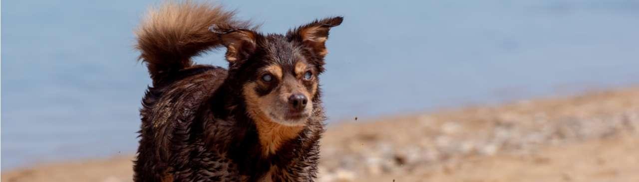 Hond suikerziekte - Dierenarts Boschhoven