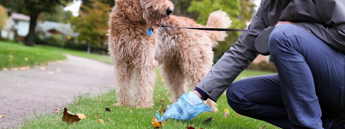 Hondenpoep - Dierenkliniek Coppelmans