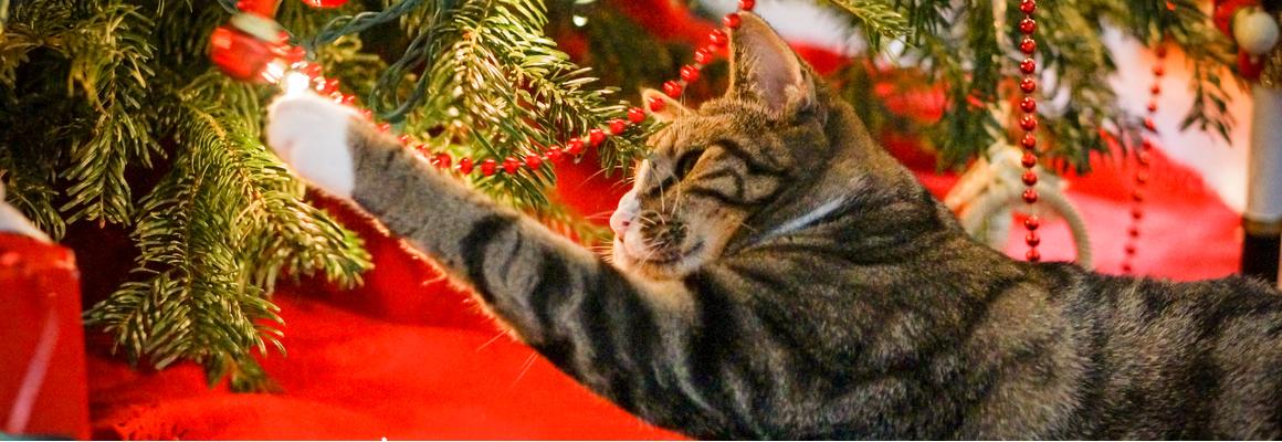 Kat kerstboom - Dierenarts Boschhoven