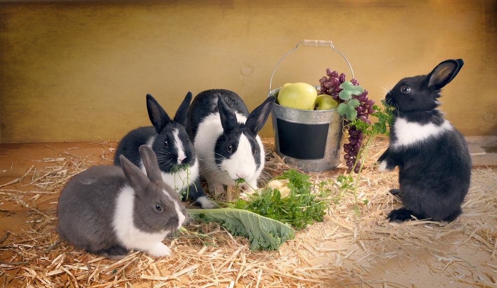 Konijn groente voeding - Boschhoven