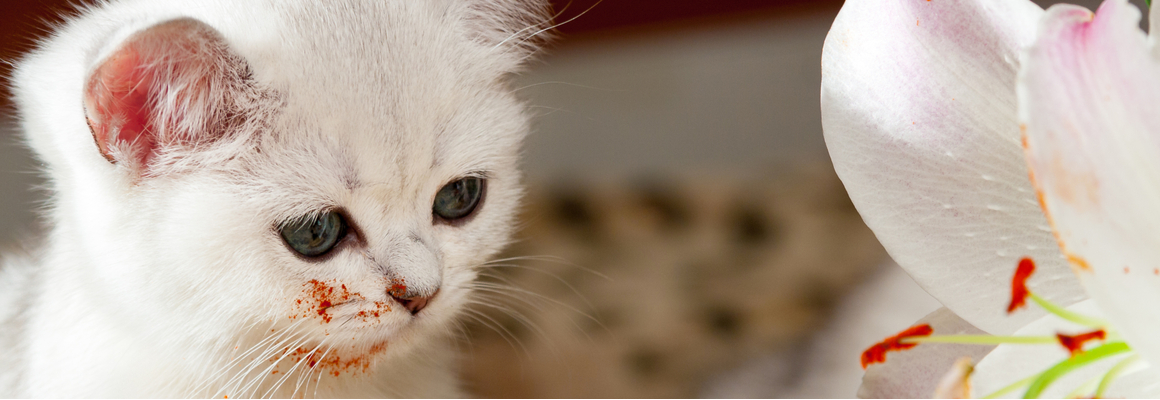 Lelies katten - Dierenarts Boschhoven