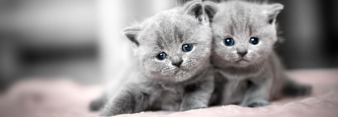 Dierenarts-Boschhoven-aanschaf-kitten-poes