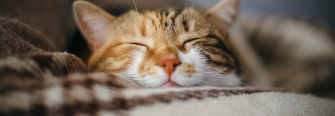 operatie-katten