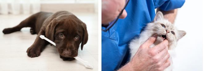 Tandheelkundig dierenarts Boschhoven Kliniek voor Dieren