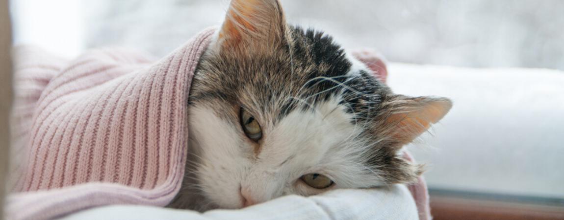 kat-ziekte